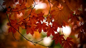 autumn-leaves-word-from-the-lord